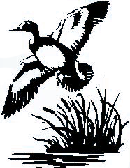 Drawing of bird flying in marsh