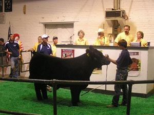Governor's Steer Show